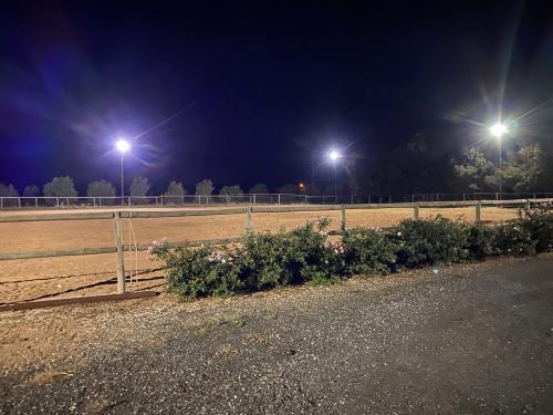 Outdoor Paddock Lighting